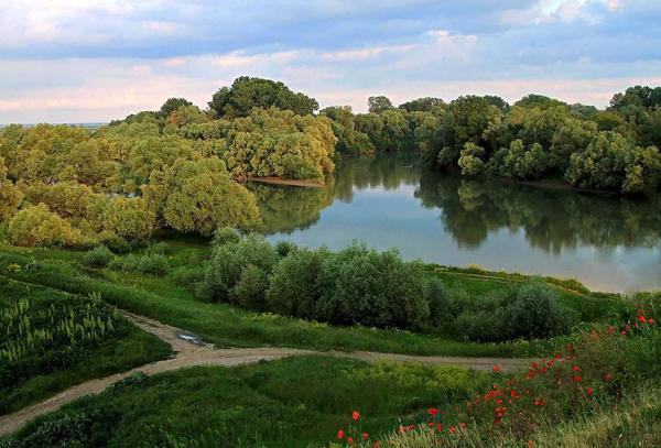Кубань, река Протока .jpg